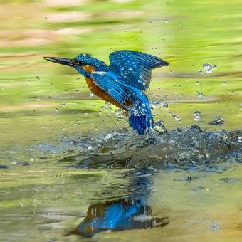Vodní Torpédo