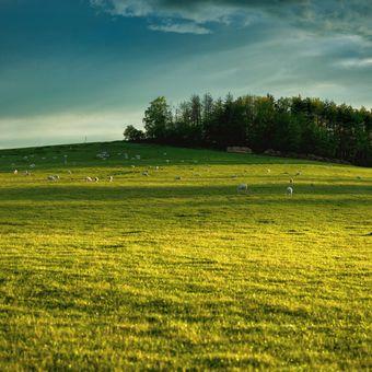 Pastvina a ovce