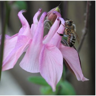 Včelka klenot přírody...