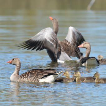 Rodinný výplav