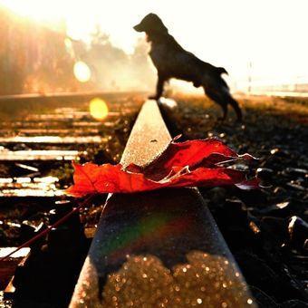 Podzim na kolejích