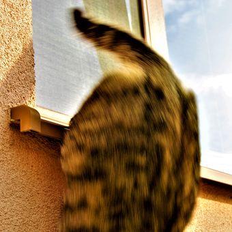 Kočička hapala?