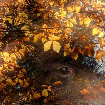Strážce pána podzimu