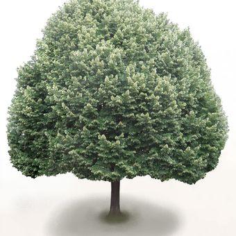 To je strom (kdyby někdo nevěděl)!