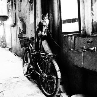Kočka na provázku