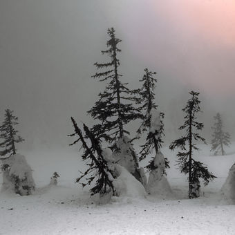 Mlhavo v Jeseníkách