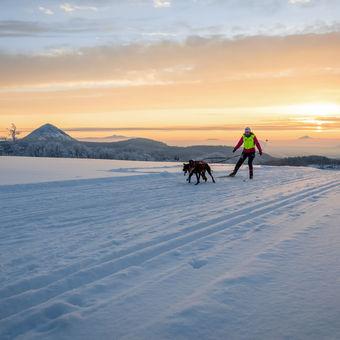 Skijoring při svítání