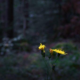 Večerní les