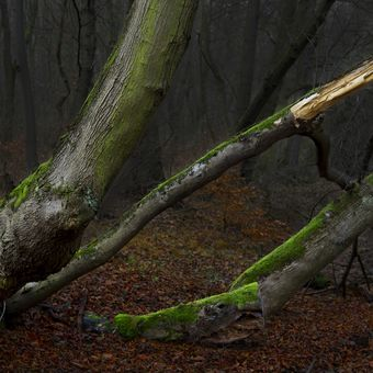 Tajemný les II