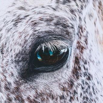 Oči jsou zrcadlem do duše.