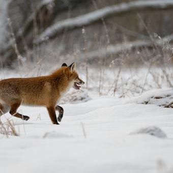 V zimním kabátě