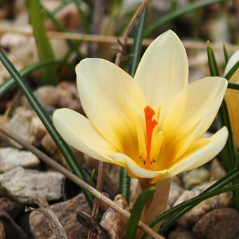 Kvetou