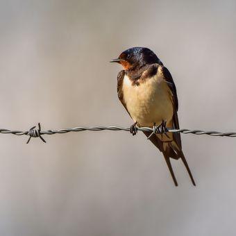 Pták na drátě :-)
