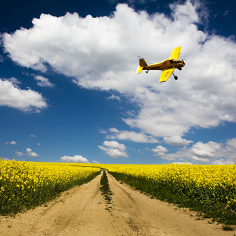 Krajina ve žluté