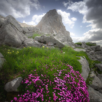 Rozkvetlý Triglavský Národní Park