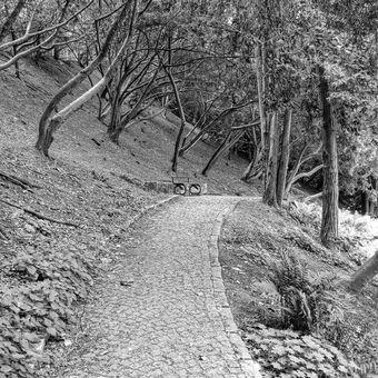 Cestička k lavičce