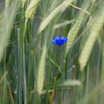 Jarní Provence