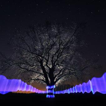 Cesta za energií stromů...
