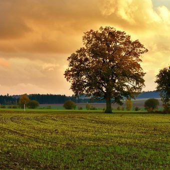 Podzimní večer s jarním nádechem