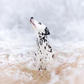 sněhová tečka