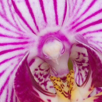 Hoya UV filtr HD 52 mm