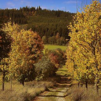 Podzimní Šumava