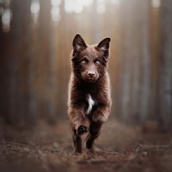 Medvídě nebo štěně?