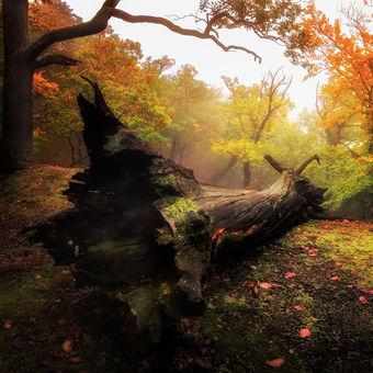 Farebný les