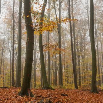 Podzim v Chřibech