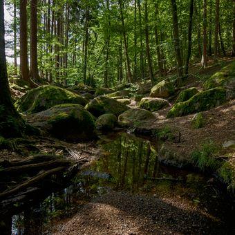 Koryto Zvánovického potoka (4)