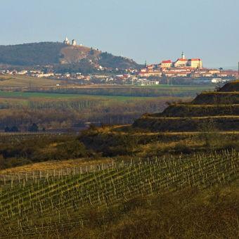 Mikulov z Dunajovických kopců