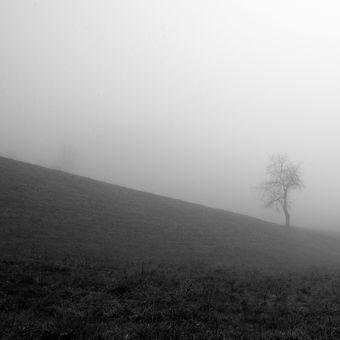 Louka a stromy