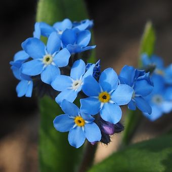 Nezapomeň,jaro je tady