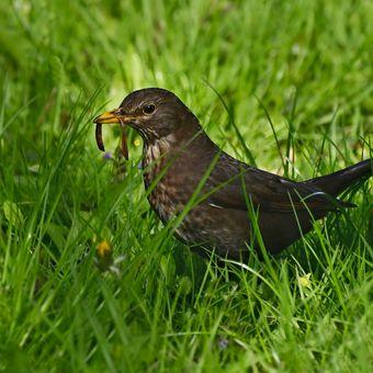 Snídání v trávě