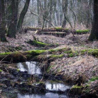 potok Olešník