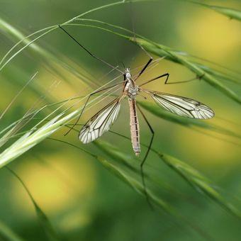 V trávě... (3)