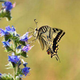 Óóó, ten sladký nektar!