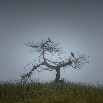 Setkání před bouří