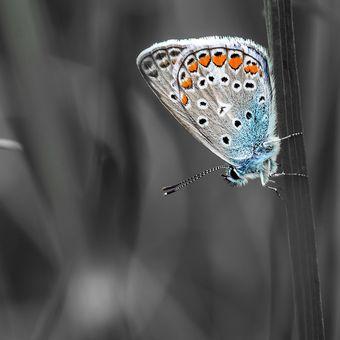 Motýlí život