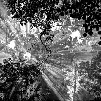 stín a a les