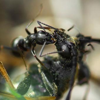 Mravenčí útok