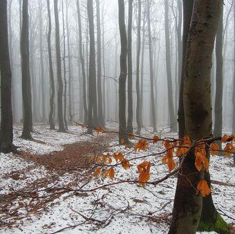 Zimní les po Čečelem