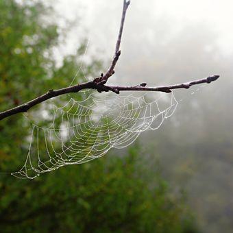 Pavoučí dílko a mlha 3