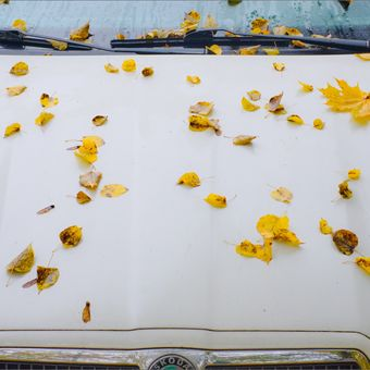 Podzim prozaický