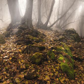 Tajemný les v mlze
