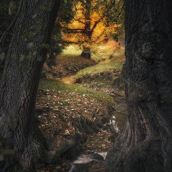 Průhonický les V2