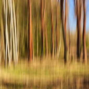 V začarovaném lese