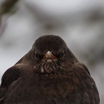 Trochu naštvanej pták