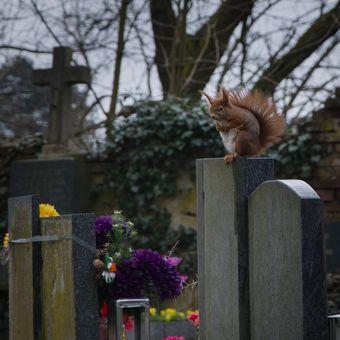 Hřbitovní služba