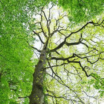 Probouzející se strom